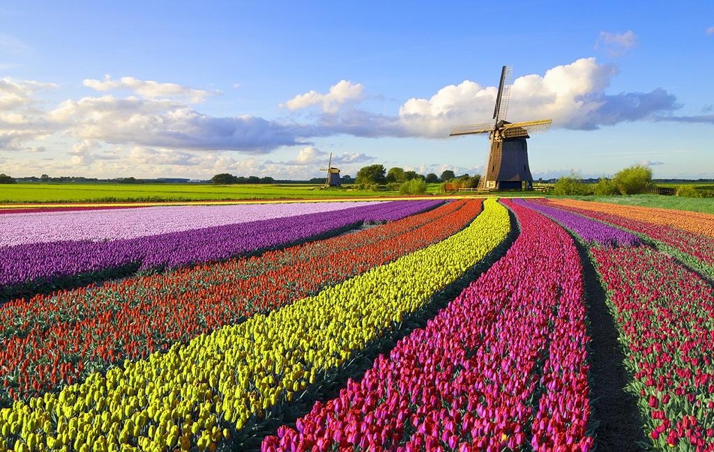 Les couleurs vives des champs de tulipes