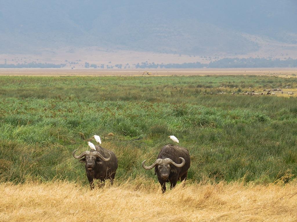 Dans cratère du Ngorongoro - ©Sandrine Perrot
