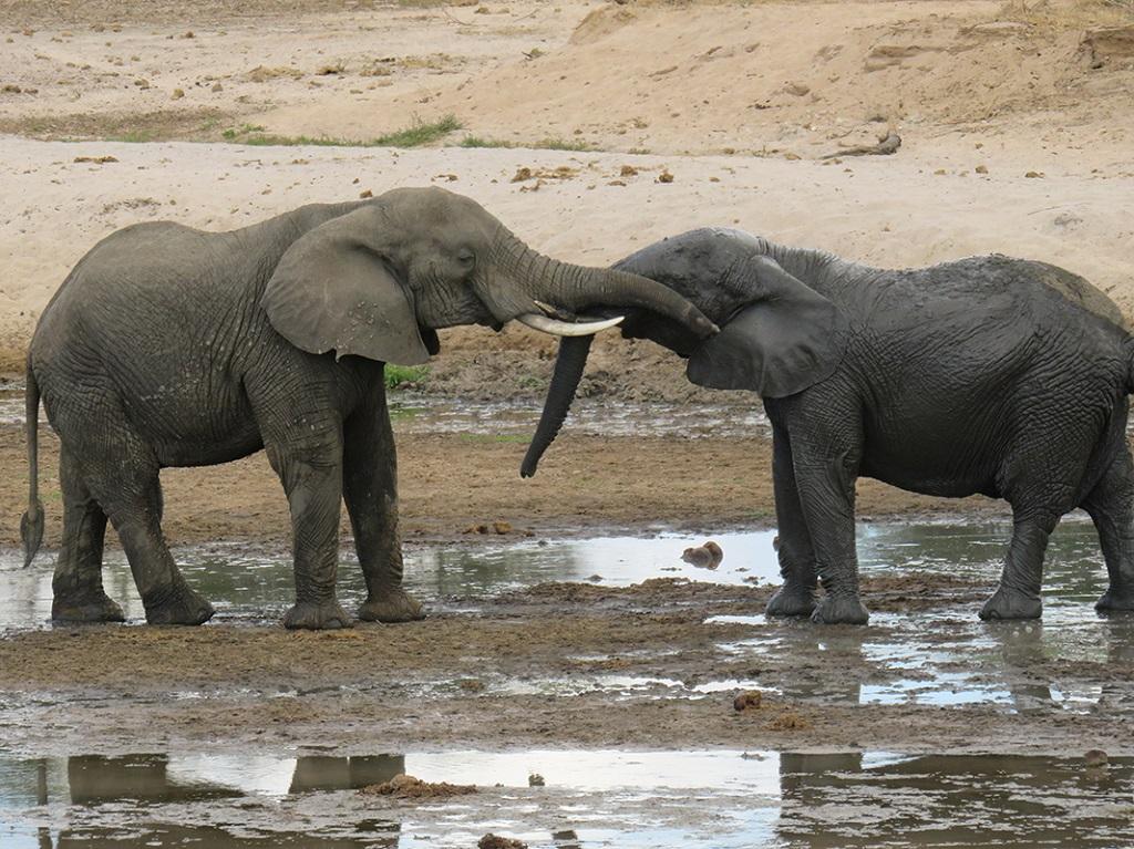 Les éléphants dans le parc du Tarangire - ©Sandrine Perrot