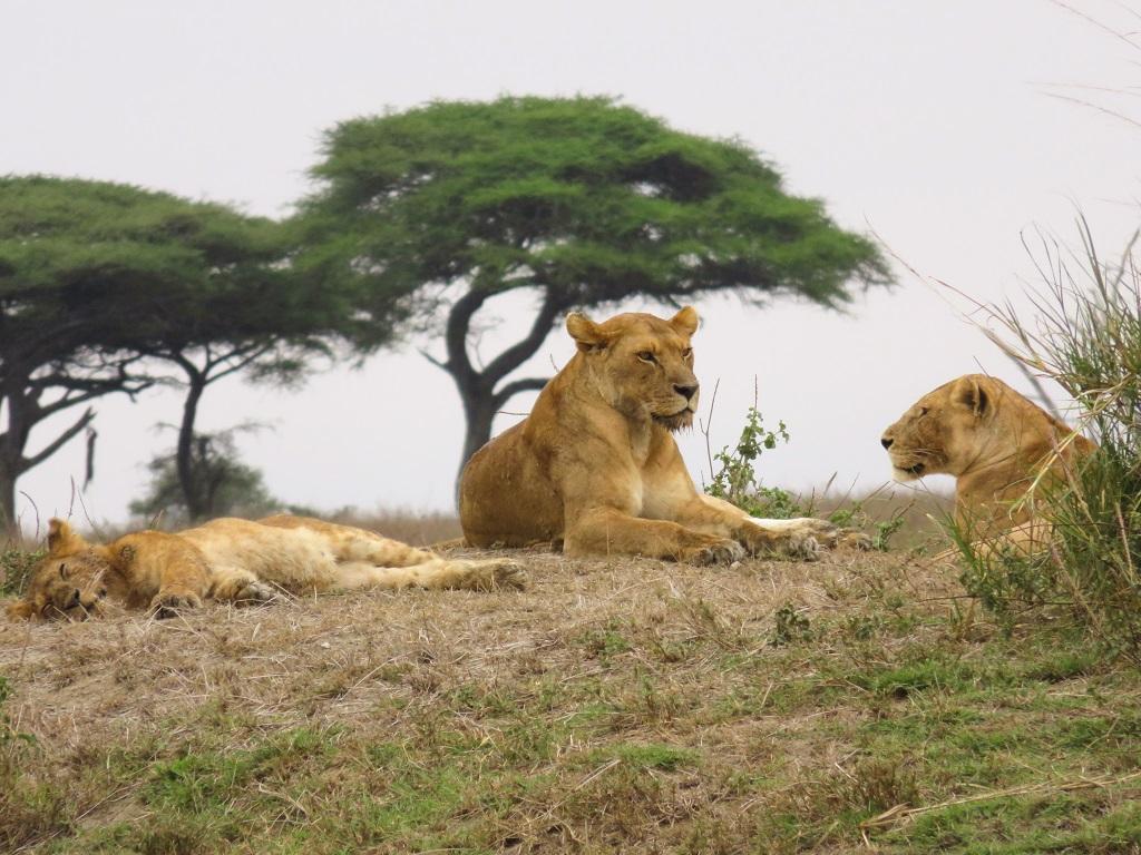 Nos rencontres avec les animaux sauvages lors du safari - ©Sandrine Perrot