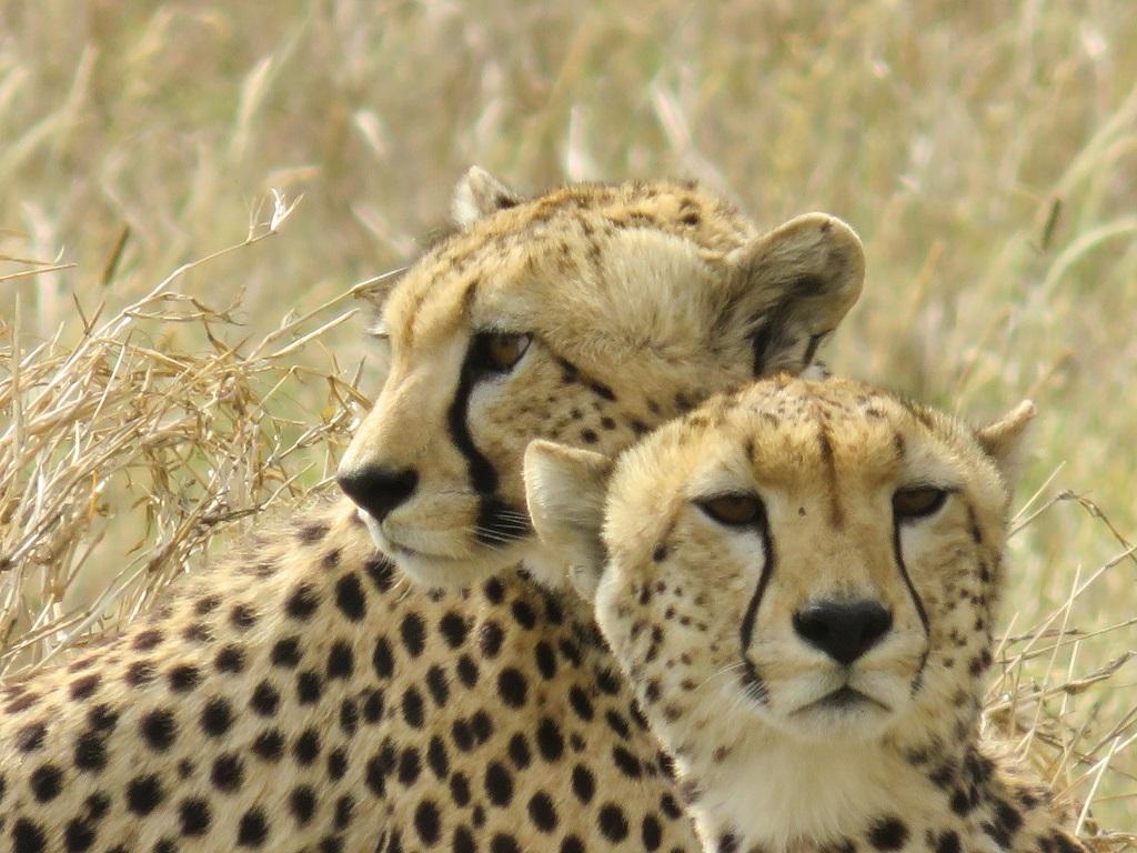 Nous avons même pu voir des guépards ! - ©Sandrine Perrot