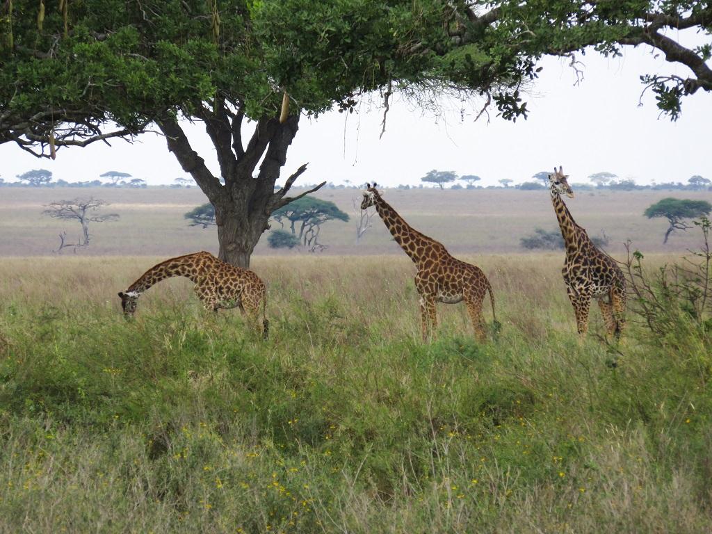 Dans le parc national du Serengeti - ©Sandrine Perrot