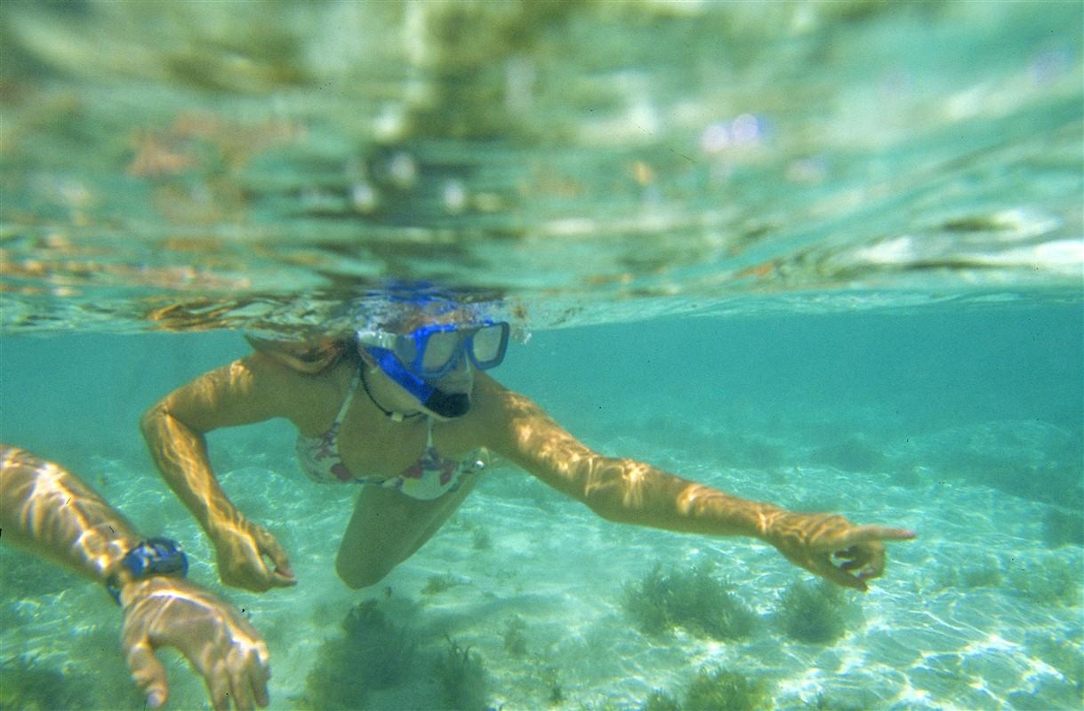 Plongée aux Antilles