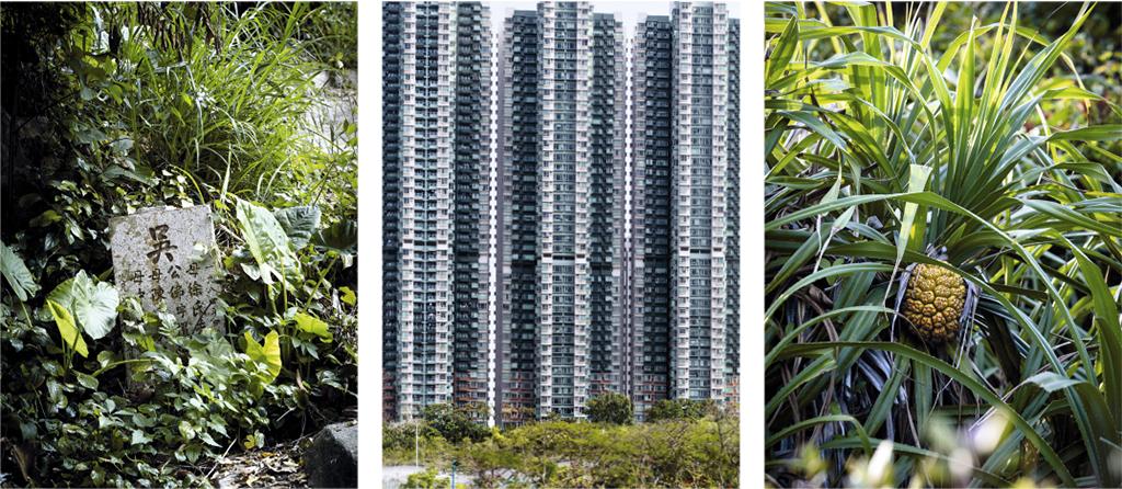 Hong Kong et sa végétation urbaine