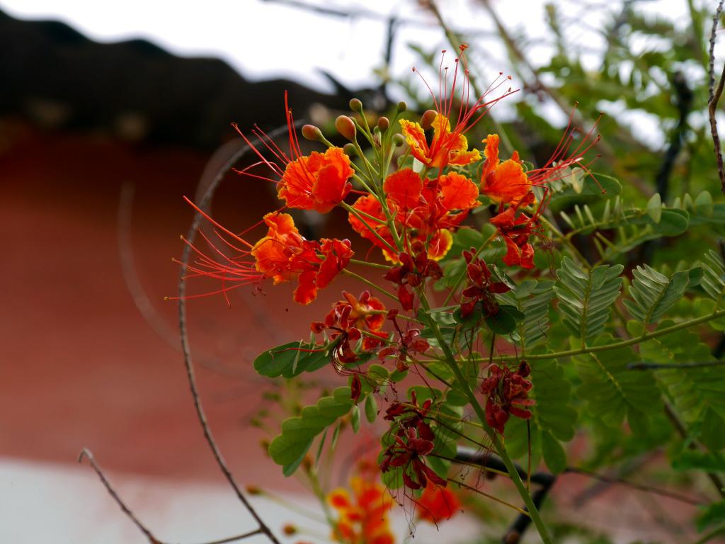 Fleurs, Sine Saloum
