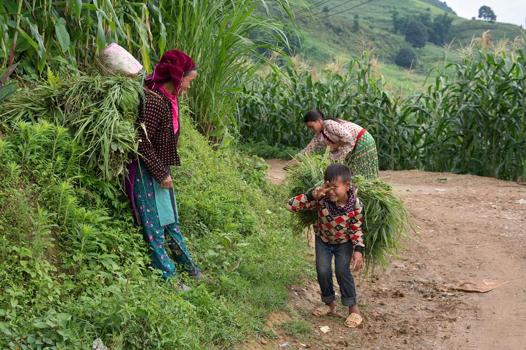 Paysans Hmong dans les environs du village de Yen Binh, plateau de Dong Van