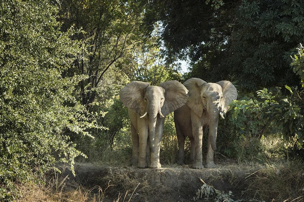 Éléphants en Éthiopie