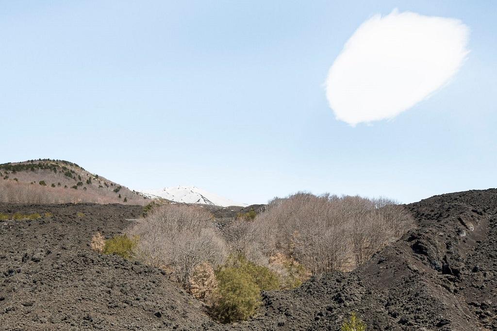 La lave est source de fertilité pour les plantes. Selon l'altitude, diverses espèces prennent racine dans la roche, assurant à l'Etna une faune et une flore variées. Province de Catane, Nicolosi, 1er avril 2015. - ©Massimo Siragusa/Agence Vu'