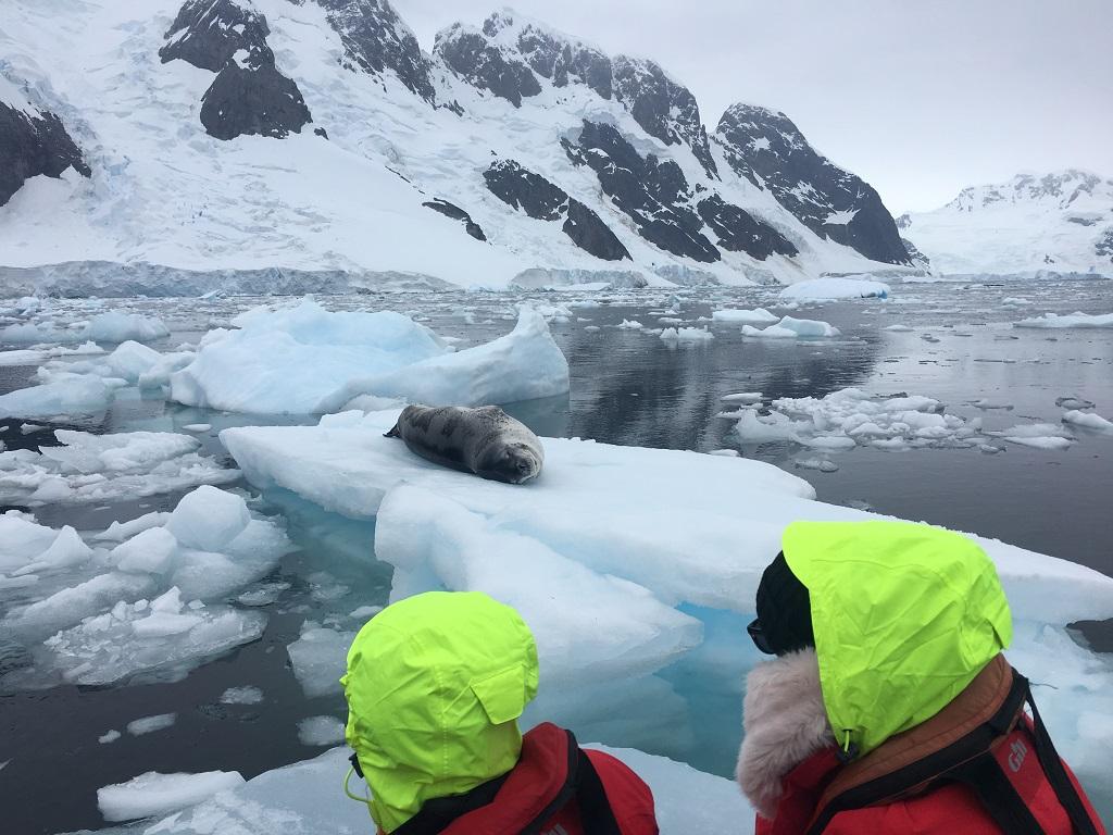 Observation des phoques se prélassant sur des morceaux de glace flottant tout autour de nous - ©Aymeric Labiche