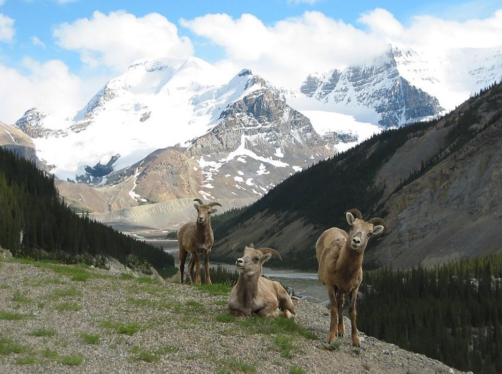 A la rencontre de la faune - ©Destination Canada