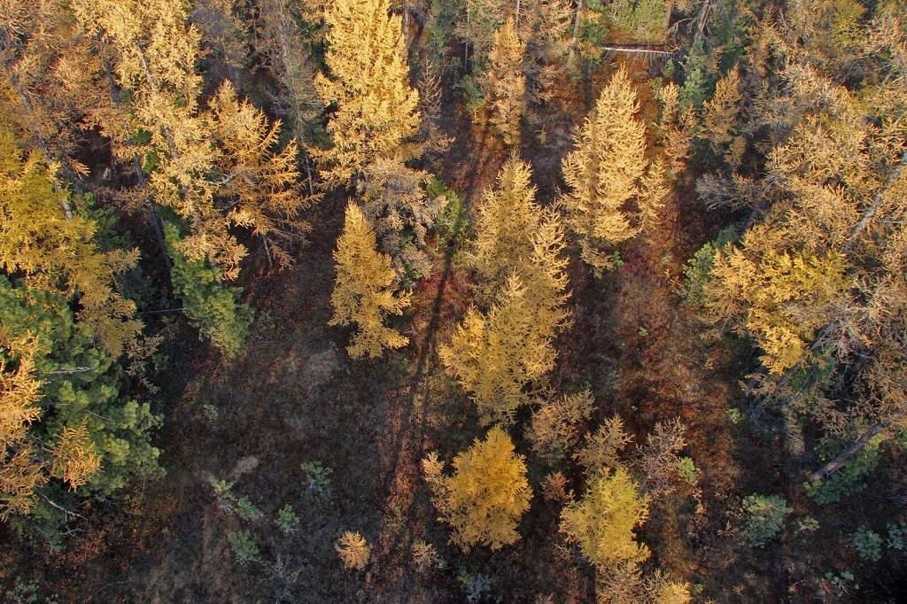 Taïga automnale : vue depuis la tour d'observation du nord de la réserve. - ©Sergey Shitikov